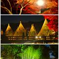 白鳥庭園「紅葉ライトアップ 2015」No - 227:紅葉、雪吊り、竹林