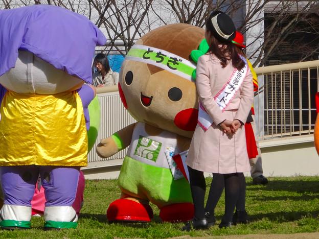 旅まつり 2016 No - 69:栃木のゆるキャラ「とちまるくん」