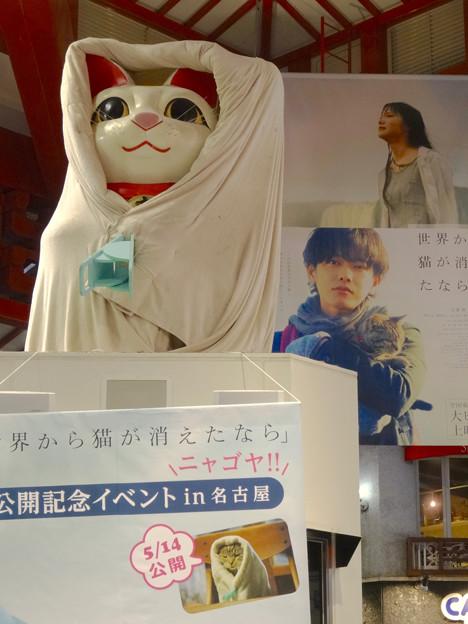映画『世界から猫が消えたなら』コラボで布団かぶってる(?)、大須の招き猫 - 2