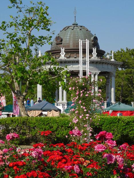 鶴舞公園:満開だったバラ園のバラ(2016年5月15日) - 17(バラ越しに見た奏楽堂)