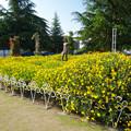 鶴舞公園:満開な黄色い花と裸像 - 1