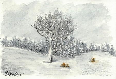 20160125雪と樹