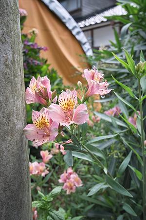 Flower07022011sd15-09