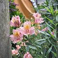Photos: Flower07022011sd15-09