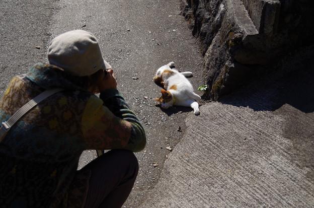 黒川温泉 猫歩き!