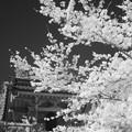 Photos: 鐘楼(赤外)