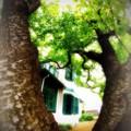 Green green house.......