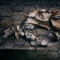 Photos: 廃線の標本 2