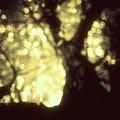 Gold.......