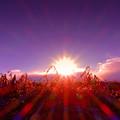 写真: 荒野に虹を咲かせましょう.......
