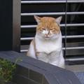 Photos: 151018 高野山 ネコ