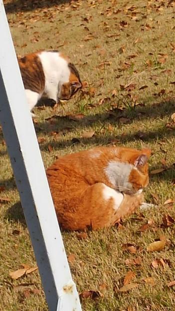 野良猫の日光浴