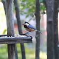 野鳥観察ができるカフェで  3