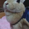 Photos: ちょこちゃん