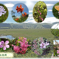 Photos: 八島湿原