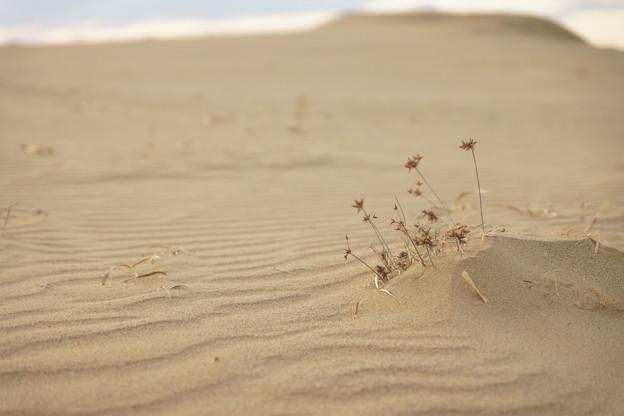 砂丘に生きる