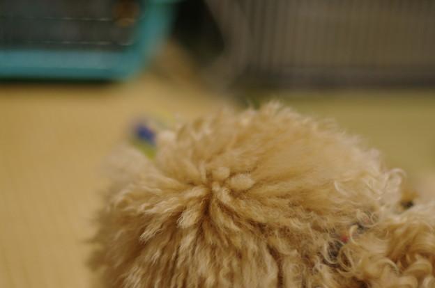 レゲー犬マロン