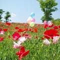Photos: IMGP3902_0527