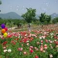 Photos: IMGP9370_0531
