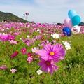 Photos: IMGP4915_1108