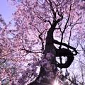 Photos: 春の向こう側