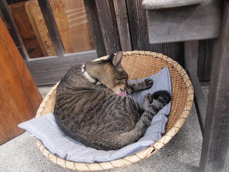 ざるの上の猫