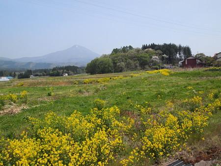磐梯山とお花