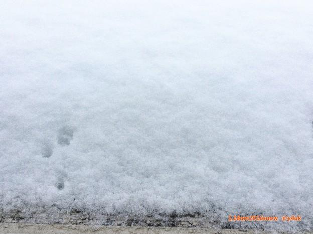 今冬初雪が大雪で寒い日 ~2016.1.18am(iPadからでもExif)