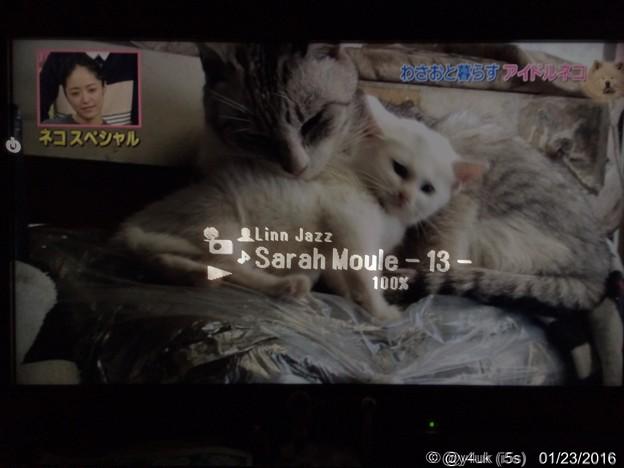 Photos: 123の日と気づき急いでにゃんこ&ネットラジオJazz合成!共に一瞬の癒し ~One two three