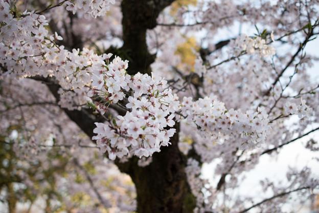 上野公園にて1