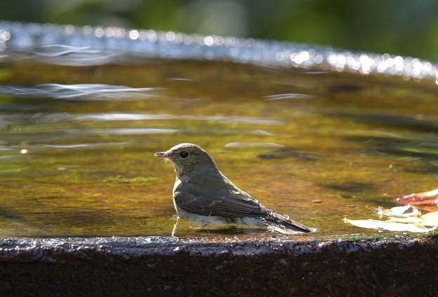秋色の水面が