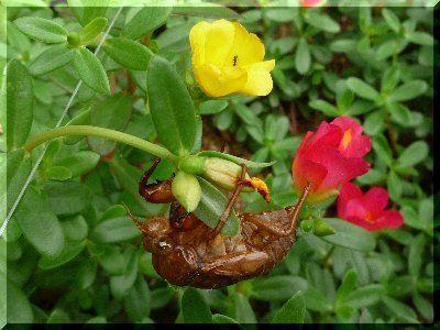 20080809花壇の中の世界10