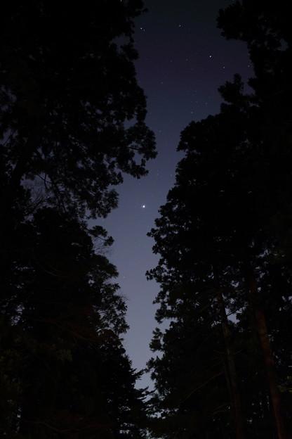 杉林から覗く星空