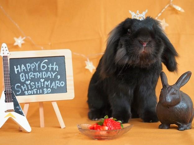 Photos: Happy 6th birthday,shishimaro my dear!