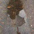 Photos: 雨上がる