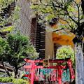 写真: metropolis_北品川界隈-01豊川稲荷(陀祀尼真天)_稲荷堂a