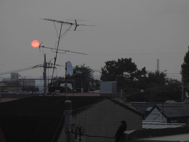 夜明け_赤い太陽とカラス_2015.10.21.-01b