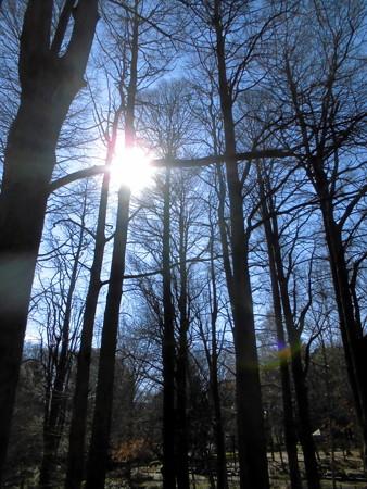 林試の森公園_裸木-04