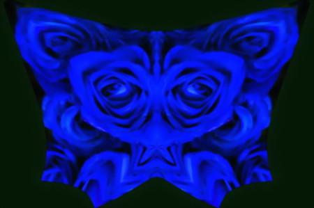 青い薔薇-05