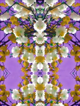梅の花-01