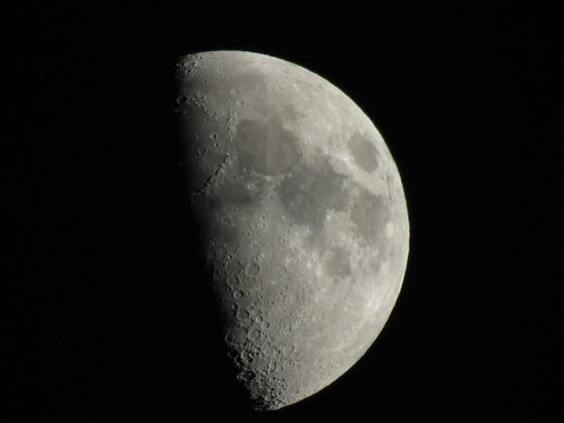 上弦の月(月齢7.7)
