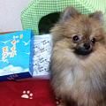 Photos: かもめの玉子