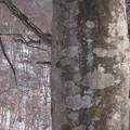 Photos: クマの爪痕