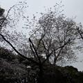 Photos: 切通公園