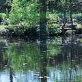 Photos: 朝の水辺~木