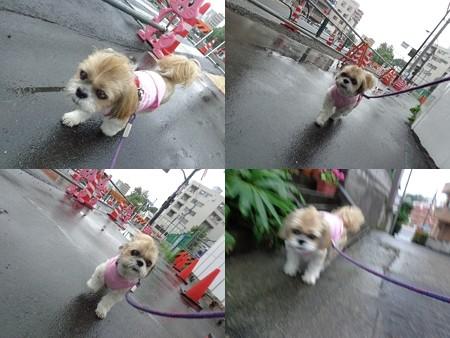 雨の散歩2