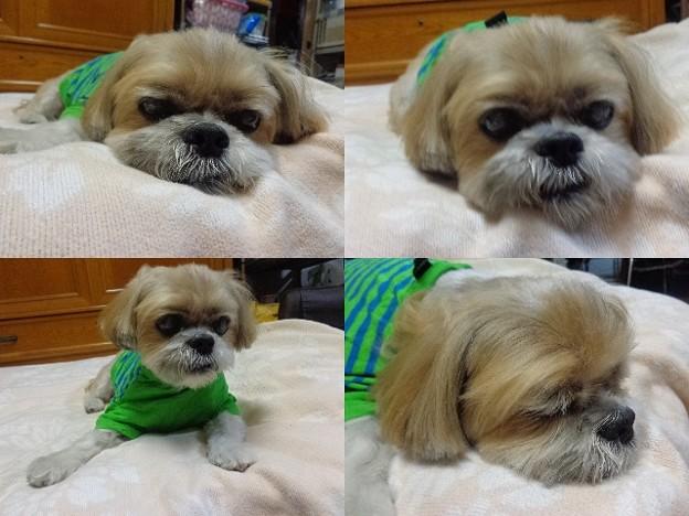 緑ボーダーT