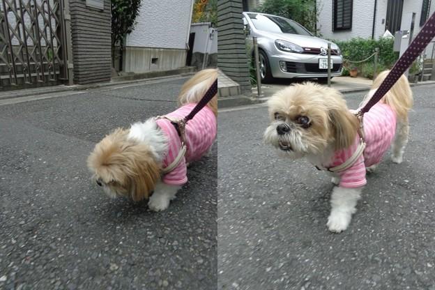 ピンクで散歩