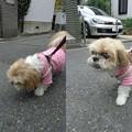 写真: ピンクで散歩
