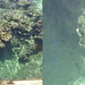 写真: 宮古島海2